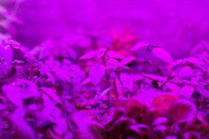 indoor-LED-grow-light-indoor-farming