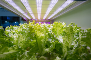 indoor-farming-light-temperature-humidity-control